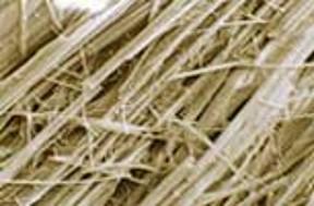 Brown asbestos